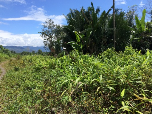 A clearing in an Upano River Valley community.